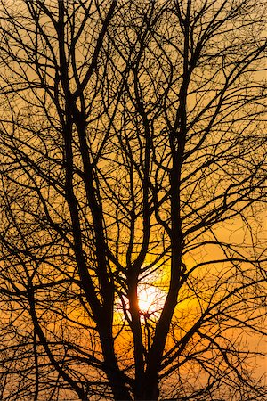Sunset through Tree Branches, Hesse, Germany Stock Photo - Premium Royalty-Free, Code: 600-07966189