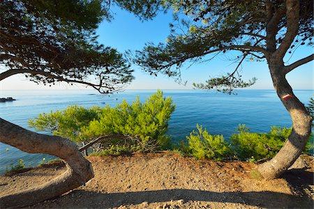 france - Pine Tree with Sea, La Couronne, Martigues, Cote Bleue, Mediterranean Sea, Bouches-du-Rhone, Provence-Alpes-Cote d'Azur, France Stock Photo - Premium Royalty-Free, Code: 600-07991528