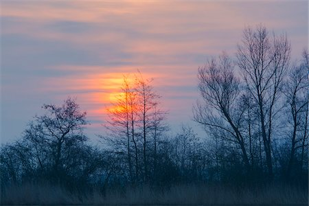 Bare Trees at Sunrise, Hesse, Germany Stock Photo - Premium Royalty-Free, Code: 600-07991723