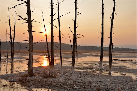 Dead Pine Trees in Fountain Paint Pot at Sunset, Lower Geyser Basin, Yellowstone National Park, Wyoming, USA Stock Photo - Premium Royalty-Free, Code: 600-08002216