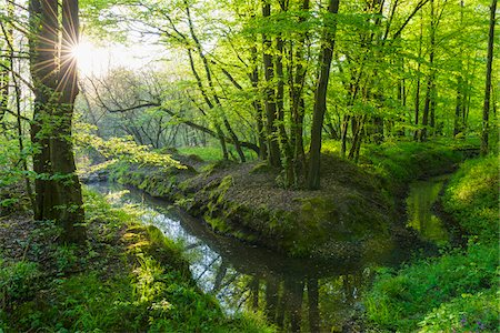 streams scenic nobody - Beech tree (Fagus sylvatica) Forest and Brook in Spring, Hesse, Germany Stock Photo - Premium Royalty-Free, Code: 600-08002613