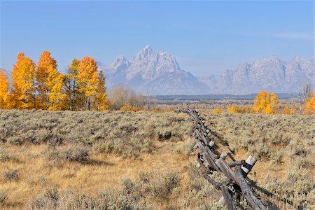Buck and rail fence with Teton Mountain Range in background, Jackson, Grand Teton, Grand Teton National Park, Wyoming, USA Stock Photo - Premium Royalty-Free, Code: 600-08026147