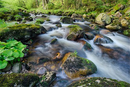 flowing - Kalte Bode in Elendstal, Schierke, Harz, Saxony-Anhalt, Germany Stock Photo - Premium Royalty-Free, Code: 600-08082973