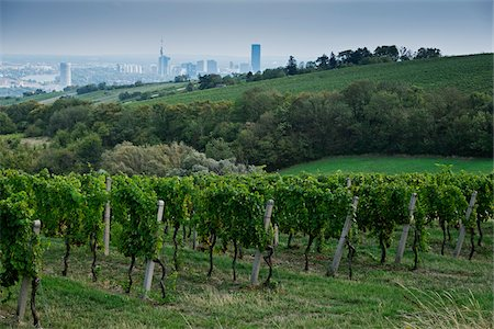 Vineyard with City in the Background near Grinzing, Vienna, Austria Stock Photo - Premium Royalty-Free, Code: 600-08212944
