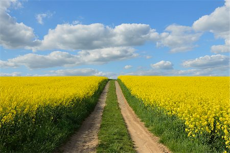 scenic view - Dirt Tracks through Canola Field, Schmachtenberg, Spessart, Franconia, Bavaria, Germany Stock Photo - Premium Royalty-Free, Code: 600-08232299