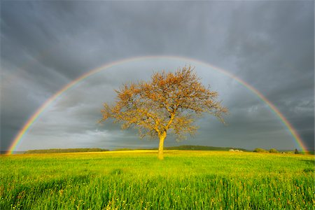 season - Plane Tree in Meadow with Rainbow in Spring, Bad Mergentheim, Baden-Wurttemberg, Germany Stock Photo - Premium Royalty-Free, Code: 600-08312085