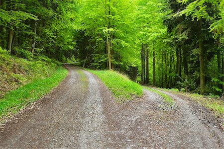 Forked Forest Road in Spring, Miltenberg, Miltenberg-District, Churfranken, Franconia, Bavaria, Germany Stock Photo - Premium Royalty-Free, Code: 600-08353526