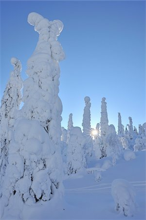Snow Covered Trees with Sun in Winter, Rukatunturi, Kuusamo, Nordoesterbotten, Finland Stock Photo - Premium Royalty-Free, Code: 600-08353520