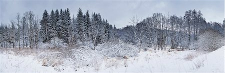 panoramic winter scene - Snow covered landscape of trees on a meadow in a valley in winter, Upper Palatinate, Bavaria, Germany Stock Photo - Premium Royalty-Free, Code: 600-08386093