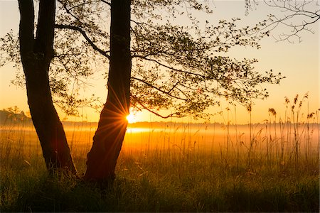sun - Trees at Sunrise on Misty Morning in Spring, Hesse, Germany Stock Photo - Premium Royalty-Free, Code: 600-08559806