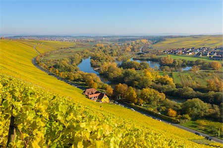 River Landscape with Colorful Vineyards in Autumn, Volkach, Nordheim, Alte Mainschleife, Mainfranken, Franconia, Bavaria, Germany Stock Photo - Premium Royalty-Free, Code: 600-08578865