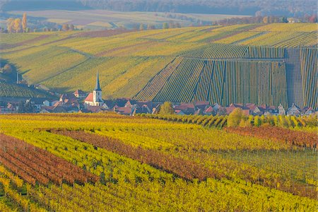 Colorful Vineyards in Autumn, Escherndorf, Maininsel, Alte Mainschleife, Mainfranken, Franconia, Bavaria, Germany Stock Photo - Premium Royalty-Free, Code: 600-08578868