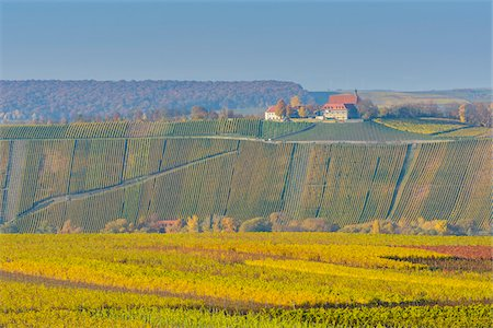 Colorful Vineyards in Autumn, Vogelsburg, Volkach, Maininsel, Alte Mainschleife, Mainfranken, Franconia, Bavaria, Germany Stock Photo - Premium Royalty-Free, Code: 600-08578870