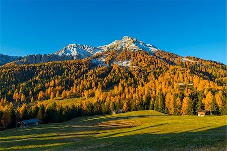 Mountain with Larches in Autumn, Vigo di Fassa, Dolomites, Trentino-Alto Adige, South Tirol, Italy Stock Photo - Premium Royalty-Free, Code: 600-08639146