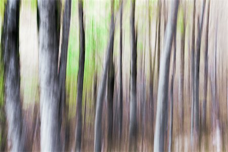Blurred, abstract tree pattern, France Stock Photo - Premium Royalty-Free, Code: 600-08765588