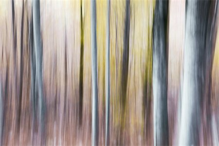 Blurred abstract tree pattern in muted hues, France Stock Photo - Premium Royalty-Free, Code: 600-08765589