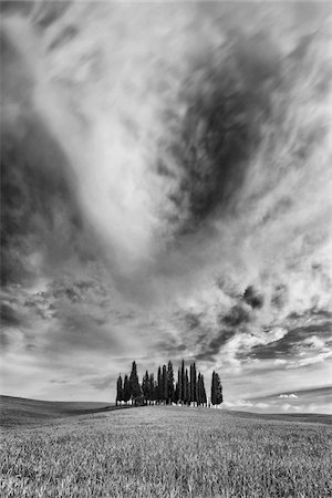 Small grove of cypress trees on an open field in San Quirico D'Orcia in Val d'Orcia in Tuscany, Italy, in black and white Stock Photo - Premium Royalty-Free, Code: 600-08765609