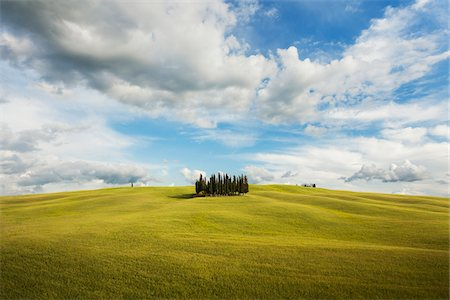 Small grove of cypress trees on an open field in San Quirico D'Orcia in Val d'Orcia in Tuscany, Italy Stock Photo - Premium Royalty-Free, Code: 600-08765612