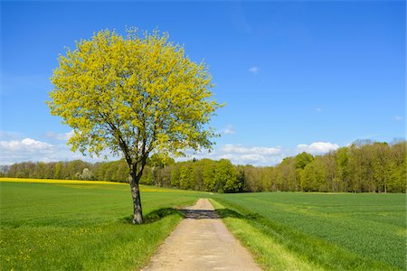 rustique - Field with Path and Maple Tree in Spring, Lichtel, Baden-Wurttemberg, Germany Photographie de stock - Premium Libres de Droits, Code: 600-08865375