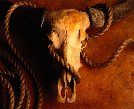 Cow Skull and Rope Stock Photo - Premium Royalty-Free, Code: 600-00016182