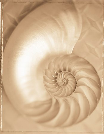 spiral - Close-Up of Nautilus Shell Stock Photo - Premium Royalty-Free, Code: 600-00041211