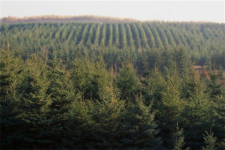 Overview of Spruce Reforestation Barrie, Ontario, Canada Stock Photo - Premium Royalty-Free, Code: 600-00073867