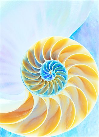 spiral - Close-Up of Nautilus Shell Stock Photo - Premium Royalty-Free, Code: 600-00084052