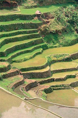 philippine terrace farming - Rice Terraces at Banaue, Province of La Union, Philippines Stock Photo - Premium Royalty-Free, Code: 600-00174291
