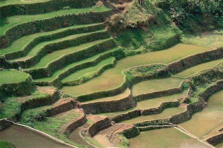 philippine terrace farming - Rice Terraces at Banaue, Province of La Union, Philippines Stock Photo - Premium Royalty-Free, Code: 600-00174292