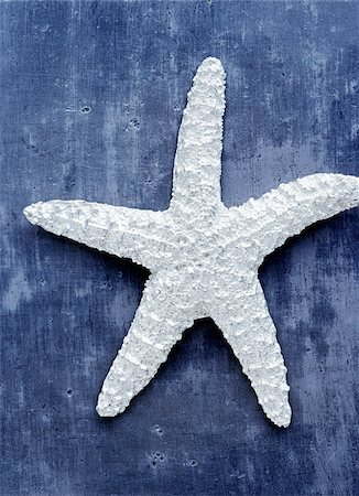 sea star - Starfish Stock Photo - Premium Royalty-Free, Code: 600-00477252