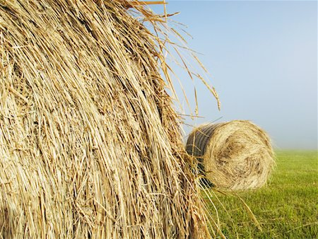 Hay Bales in Field Stock Photo - Premium Royalty-Free, Code: 600-01083959