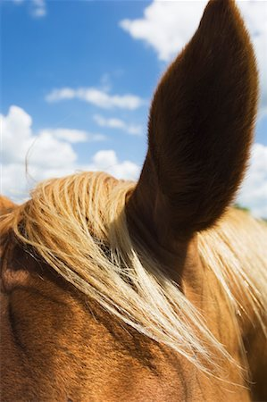 Close-up of Horse Stock Photo - Premium Royalty-Free, Code: 600-01083964