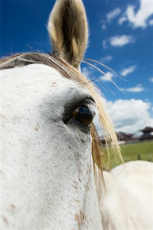 Close-up of Horse Stock Photo - Premium Royalty-Free, Code: 600-01083965
