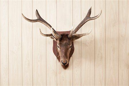 deer hunt - Deer Head on Wall Stock Photo - Premium Royalty-Free, Code: 600-01124356