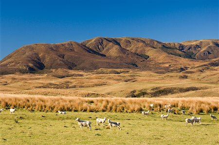 Farmland, Moawhango, North Island, New Zealand Stock Photo - Premium Royalty-Free, Code: 600-01458308