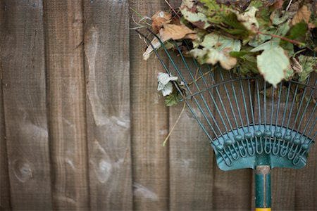 Still Life of Rake Stock Photo - Premium Royalty-Free, Code: 600-01644887