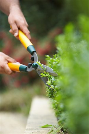 Person Trimming Hedges Stock Photo - Premium Royalty-Free, Code: 600-01644893