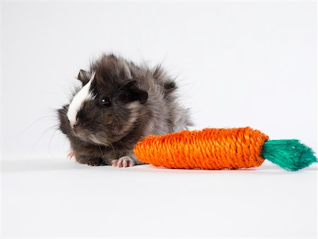 Guinea Pig with Toy Carrot Stock Photo - Premium Royalty-Free, Code: 600-01695291