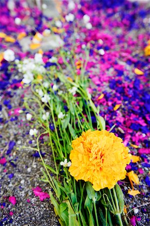 dyed - Close-up of Flowers and Dyed Wood Shavings on Grave, San Miguel de Allende, Mexico Stock Photo - Premium Royalty-Free, Code: 600-01717114