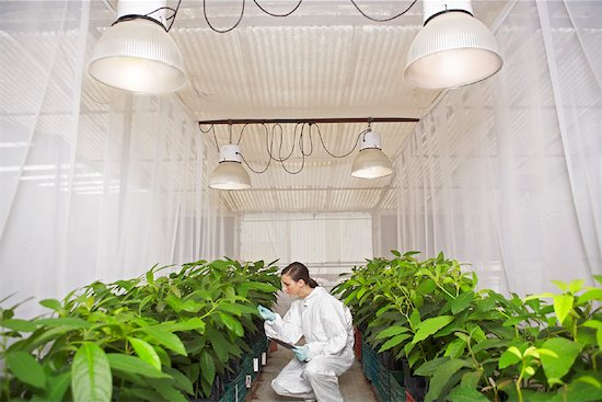Scientist in Greenhouse Stock Photo - Premium Royalty-Free, Artist: Masterfile, Image code: 600-01764610