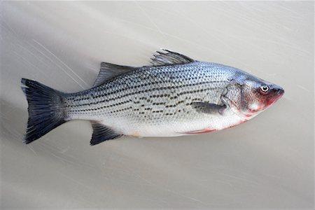 Sea Bass Stock Photo - Premium Royalty-Free, Code: 600-02046487