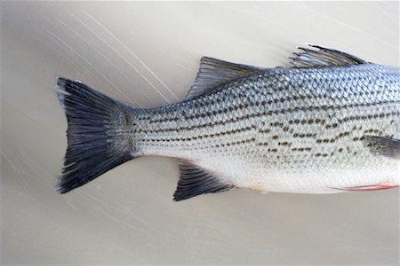 Sea Bass Stock Photo - Premium Royalty-Free, Code: 600-02046488