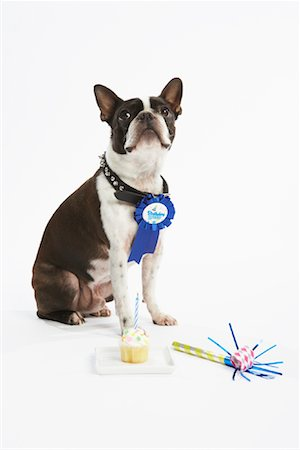 Dog with Prize Ribbon and Party Items Stock Photo - Premium Royalty-Free, Code: 600-02055856