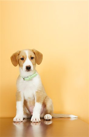 Portrait of Puppy Stock Photo - Premium Royalty-Free, Code: 600-02071443