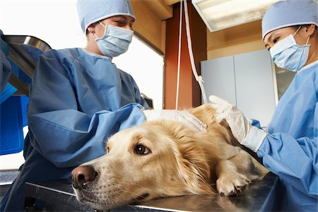 Veterinarians Working on Dog Stock Photo - Premium Royalty-Free, Code: 600-02071475
