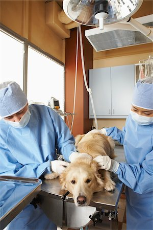 Veterinarians Working on Dog Stock Photo - Premium Royalty-Free, Code: 600-02071476
