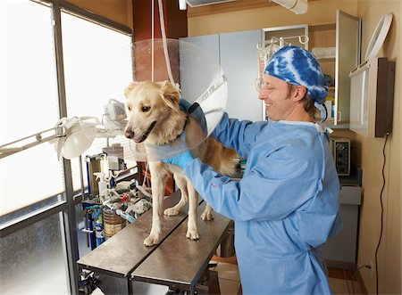Veterinarian Working on Dog Stock Photo - Premium Royalty-Free, Code: 600-02071478