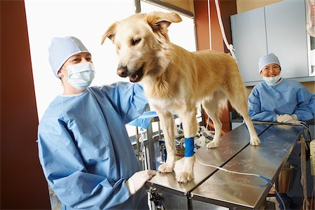 Veterinarians Working on Dog Stock Photo - Premium Royalty-Free, Code: 600-02071473