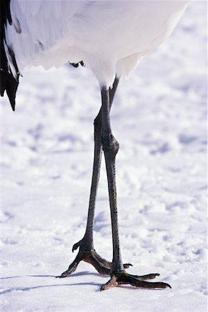 Legs of Red-Crowned Crane, Hokkaido, Kushiro Region, Japan Stock Photo - Premium Royalty-Free, Code: 600-02130253