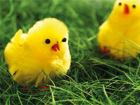 fluffy - Two Easter Chicks in Grass Stock Photo - Premium Royalty-Free, Code: 600-02244943